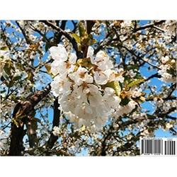 Blooming Summer (Calendar)